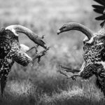 The Cycle of Life in the Serengeti