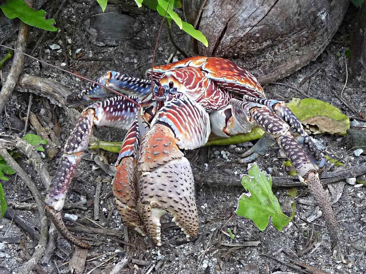 crab-649568_1280
