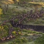 The Great Migration – An Overview