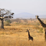 Tanzania's Best Kept Secret – Ruaha National Park
