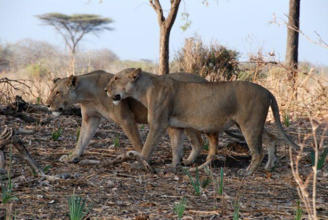 Tanzania, Southern Tanzania, southern circuit Tanzania, Ruaha, Selous, Tanzania safari, dry season safaris, Selous Safari Company, Nomad Tanzania, Beho Beho