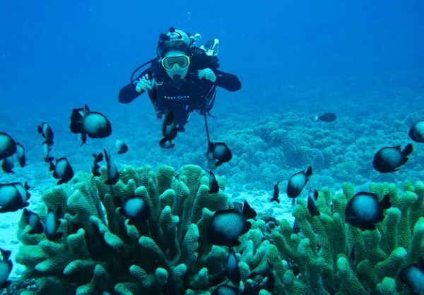 Diving and snorkelling in Zanzibar, Zanzibar Island, Tanzania, beach and bush holiday, Zanzibar honeymoon