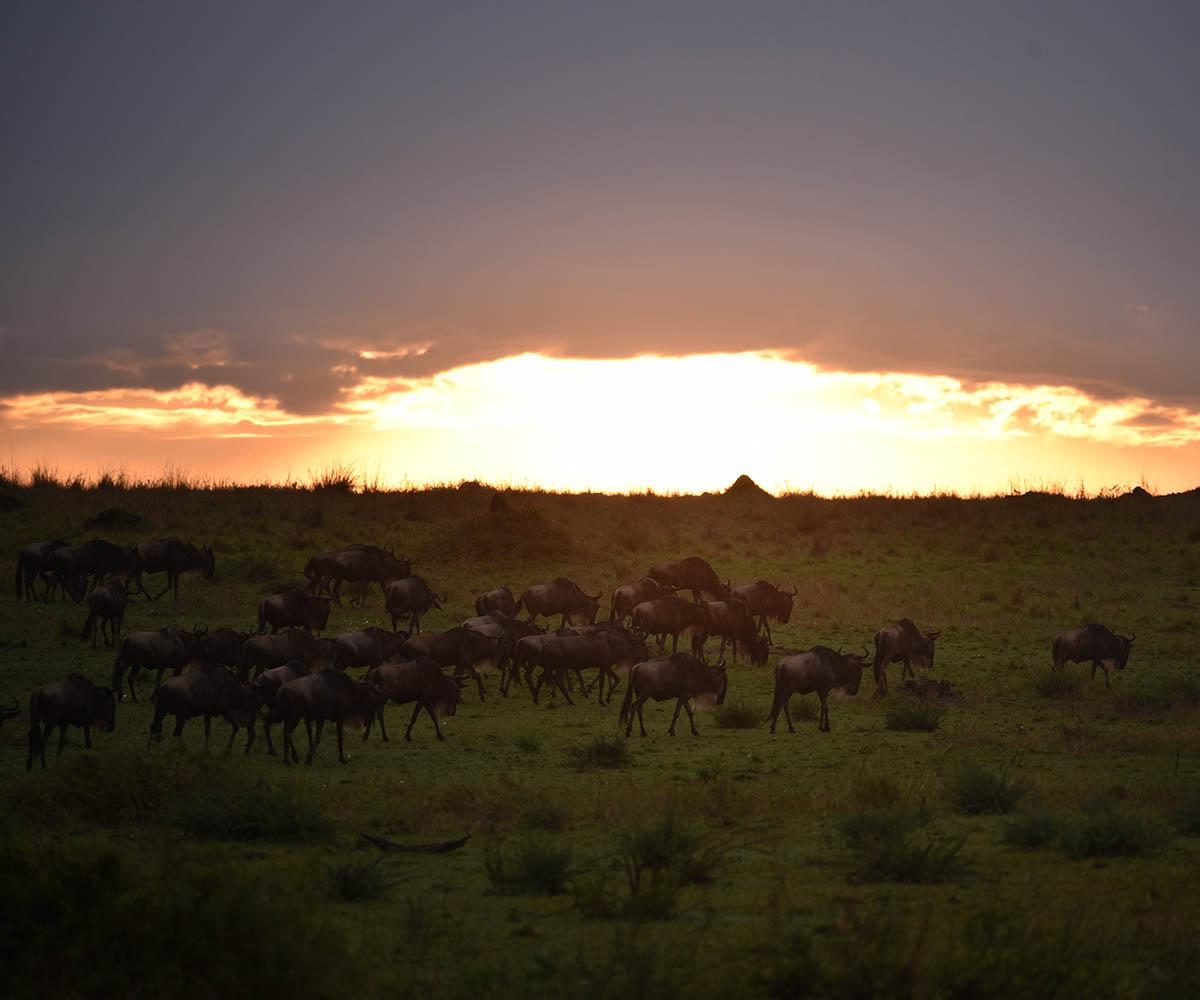 Migration sunset